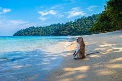 monkey-3251530__340
